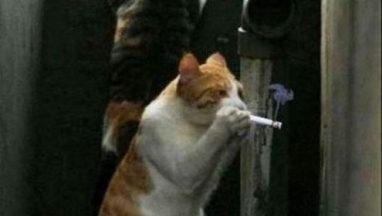 smoking-cats