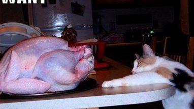 cat-turkey-2
