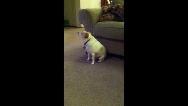 Dog Dancing to Eminem